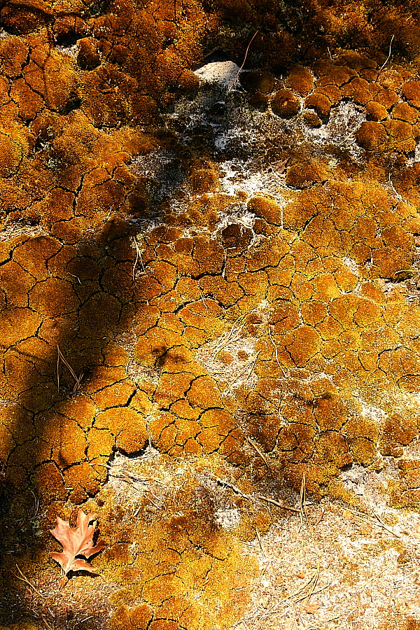 cracked_moss_28april2012